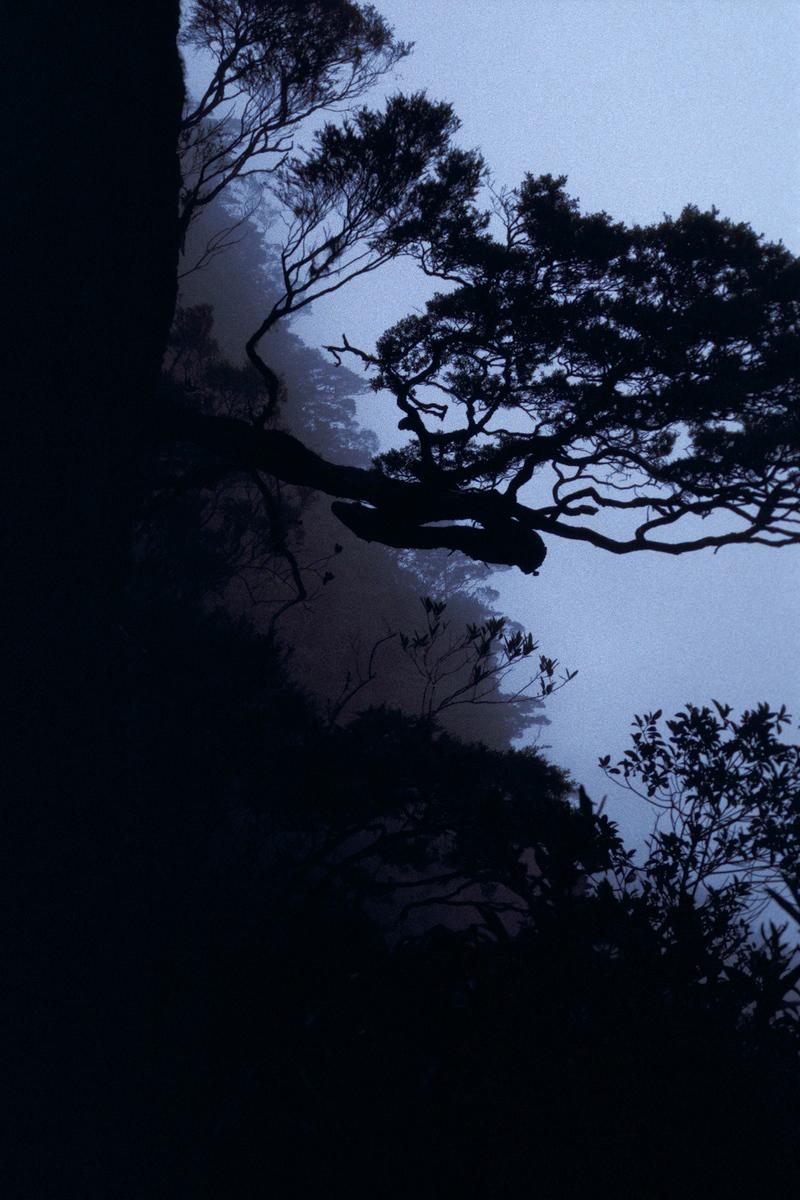 Gunung Tahan tropical montane cloud forest bonsai mist
